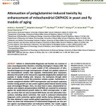 Andrea published a paper in Microbial Cell in collaboration with Dr. Grace R. Zhai